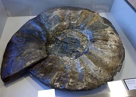 化石好きな方ならその発掘体験だけでも満足できるのでは?「いわき市アンモナイトセンター」(福島いわき)