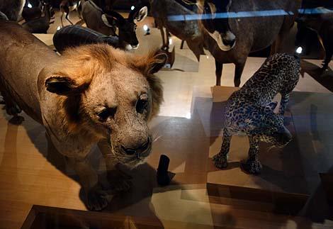 日本で一番充実している博物館やと思います♪ゼロ戦の複座型も展示「国立科学博物館」(東京上野)
