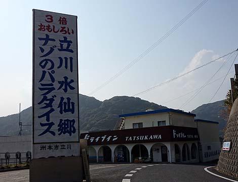 咲き誇る2種類の水仙 立川水仙郷(兵庫淡路島)