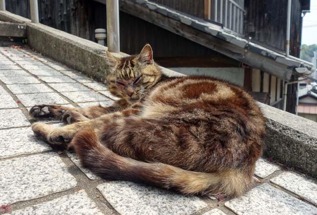 坂道だらけの尾道にて猫と戯れご当地ラーメンを食す!(日本一周333日目前編)