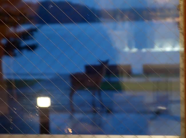 北海道のホテルとしては高級系でお馴染みの鶴雅グループ♪系列ホテル「阿寒の森鶴雅リゾート 花ゆう香」