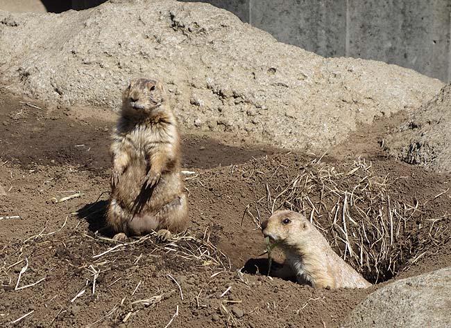 動物園に博物館♪安価で巡ることができる施設めぐりで腹ごなしを図る晴れ渡った1日