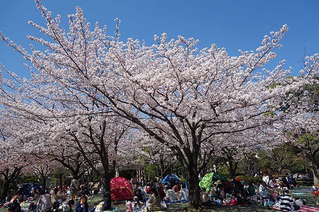 江戸川区自然動物園(東京西葛西)無料で動物と触れ合える広い公園はお子様連れに最適