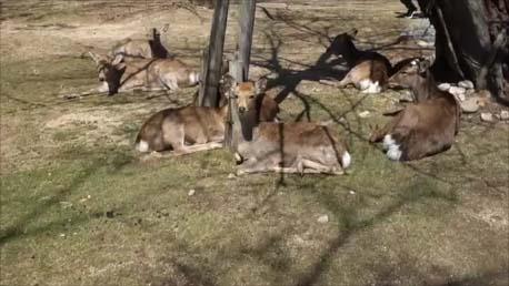 【青春18きっぷ】近畿2府4県ぐるめ名所を1日で全部周れっ!奈良の鹿は観光客から餌もらえず大丈夫なの?(その3)