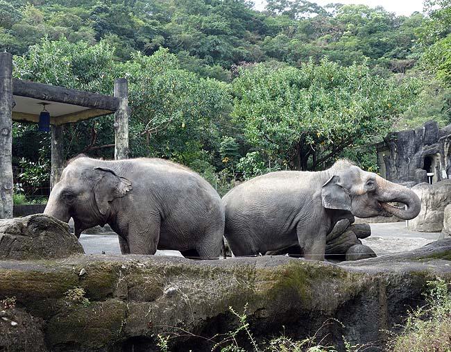上野動物園の13倍の広さは見応えあるけれどその前に歩き疲れる…アジア最大「台北市立動物園」(台湾)