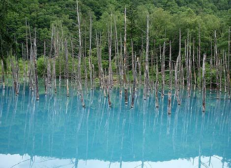 幻想的なこの青い色は絵の具でも入れたん?「白金青い池」(北海道美瑛)