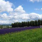 美瑛・ふらので一番人気の観光地では?北海道一のラベンダー畑?「ファーム富田」(北海道中富良野)
