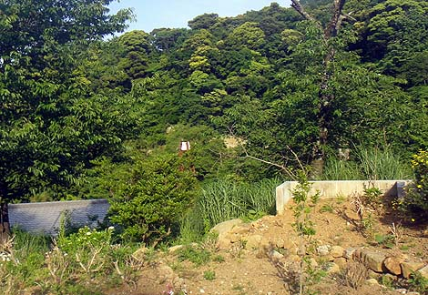 伊豆の山奥にある強アルカリ源泉かけ流しの温泉「観音温泉 ブリンシプル」(静岡伊豆下田)