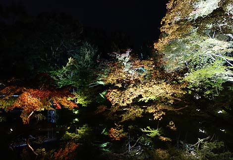 高台寺 秋の夜間特別拝観(京都祇園東山)境内を幻想的にライトアップ