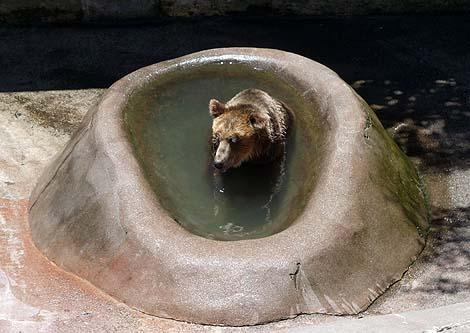 餌をおねだりする愛嬌たっぷりのヒグマ「昭和新山熊牧場」(北海道有珠郡)