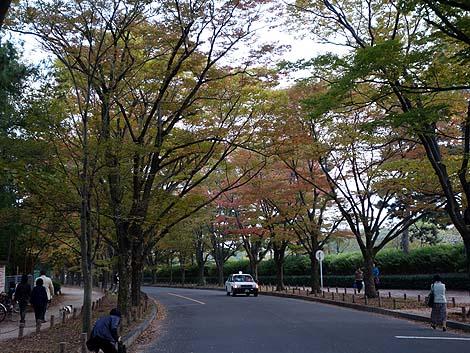 京都府立植物園(京都地下鉄北山駅・北大路駅)