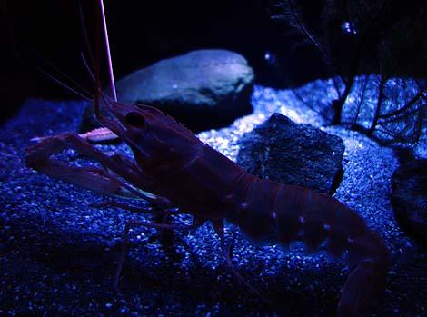 世界的にも珍しい・・・深海魚に特化した水族館「沼津港深海水族館」(静岡沼津)