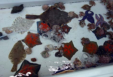 道東にある鮭[サケ]に特化した水族館「標津サーモン科学館」(北海道標津町)