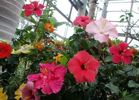 咲くやこの花館(大阪市花博記念公園鶴見緑地)