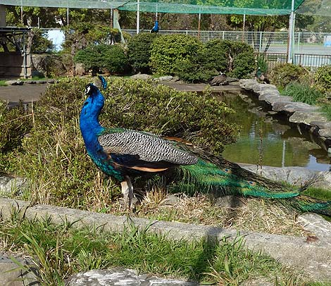 ガリバー公園と言われる異色のすべり台!(三重県・鳥羽市民の森公園)懐かしき公園遊具の世界
