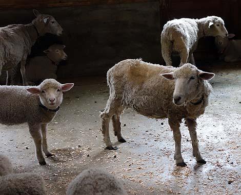 無料利用できる動物とも触れあえる牧場施設「兵庫県立但馬牧場公園」(兵庫新温泉町)