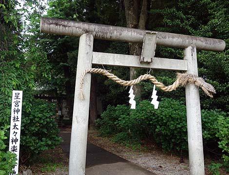 トトロが佇む童話ちっくな風景♪「星宮神社」(栃木下野)珍神社