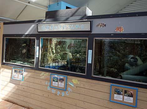 ウミガメの生態に触れ合える無料施設:道の駅「紀宝町ウミガメ公園」(三重県南牟婁郡)