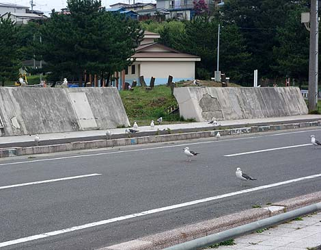 約4万羽ものウミネコが飛来する珍しい天然記念物「蕪島ウミネコ繁殖地」(青森八戸)