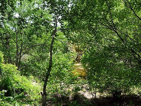 森の中に8体もの金ピカ大仏が無造作に立っている珍寺「谷厳寺」(長野県中野市)