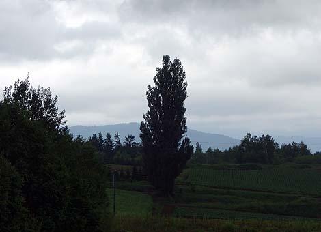 ケンとメリーの木を眺めることができる大人気の観光地「ぜるぶの丘」(北海道美瑛)